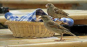 Le Prophète Muhammad (saw) et la vertu d'hospitalité
