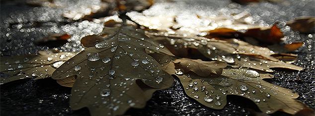Les larmes du Prophète (saw) : entre expression de la spiritualité et de l'humanité du Messager